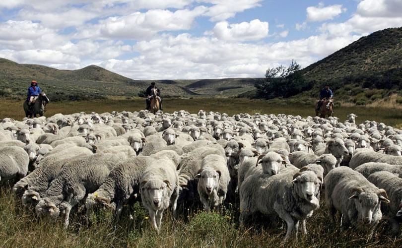 Patagonia stopt samenwerking met Ovis21 toch