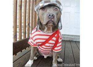 Een hond met stijl